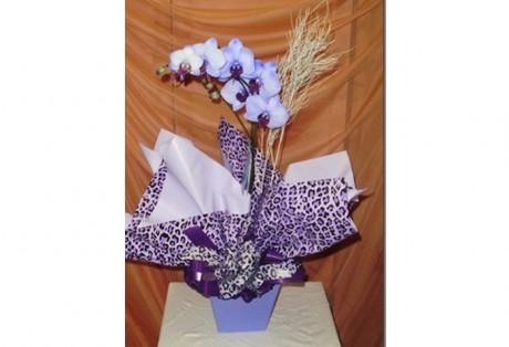 Orquídea Phaleanopsis Azul