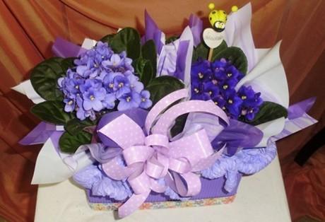 Montagem c/ 2 Violetas