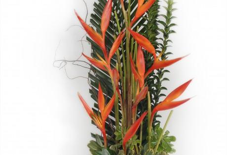 Arranjo de Heliconias